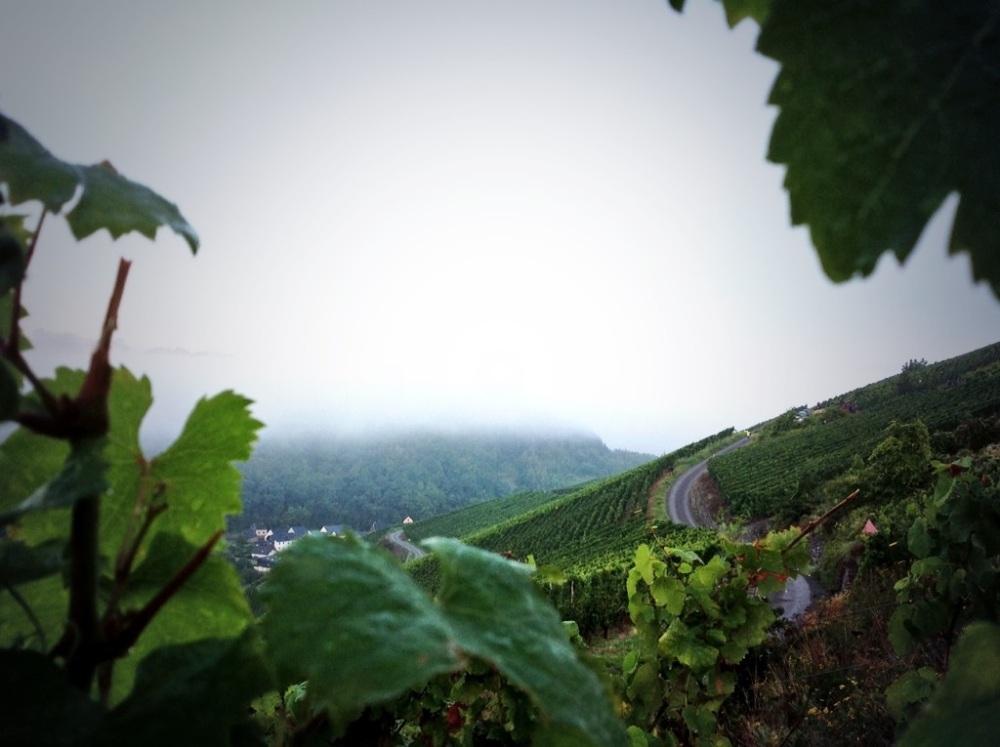 Sunnuntaiaamu Dhrontalin pätkällä valkeni hitaasti. Kuvan vasemmassa reunassa näkyvällä tiellä näin Latvalan viimeisen kerran vauhdissa. Auto valui viinirinnettä alas ylemmältä tieltä juuri näkymän ulkopuolella.